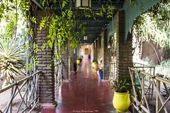 Jardin Majorelle, Marrakesh (AndyPulse1) Tags: africa canon reflex jardin morocco majorelle marrakesh travelworld