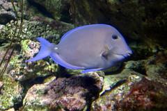Aquarium de Paris  (12) (Mhln) Tags: paris aquarium requin poisson trocadero poissons meduse 2015 cineaqua