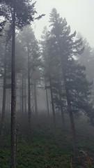 (LydiaEmilyB) Tags: beauty oregon hiking adventure explore waterfalls lephoto abiqua abiquafalls girlpluscamera