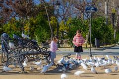 (. ) Tags: plaza america sevilla andaluca spain nikon espagne andalousie        d7000