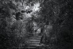 The Ruins of Cedar Glen (SunnyDazzled) Tags: bw newyork history abandoned home overgrown stairs forest estate steps victorian poughkeepsie mansion decayed cedarglen frannyreesestatepark drcharleshroberts
