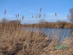 Elbe-Flutpolder Februar 2015 (Boizenburger) Tags: lake water river germany polder boizenburg elbe eastgermany poller mecklenburgvorpommern norddeutschland northgermany hochwasserschutz deiche gothmann