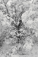 For Uncle Jim (anakin1814) Tags: winter snow cold tree death rip funeral covered