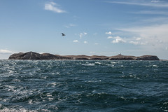 IMG_1798 (Praxedes Photographies) Tags: patagonia canon de 50mm mar viento punta puentes tres arenas turismo isla magdalena cruce estrecho magallanes pinginos barcaza melinka t5i