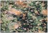 My flight (Olivia Heredia) Tags: nature méxico butterfly mexico natural butterflies rosario michoacán mariposa hdr highdynamicrange monarchbutterfly naturalreserve mariposamonarca monarca tonemapped tonemapping 1exp oliviaheredia santuariodelamariposamonarca oliviaherediaotero reservadelabiosferadelamariposamonarca