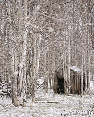 395 Shed (Danielle Denham-Skinner) Tags: trees winter snow oregon forest decay pacificnorthwest aspen decrepit ruraldecay birtch abandonedoregon