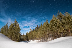 Winter dreams (stardmitry) Tags: trees winter sky snow nature night forest stars landscape