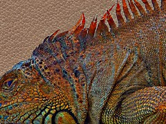 Iguana Textures (scilit) Tags: macro texture nature animal closeup skin reptile lizard iguana scales rough tmi artdigital shockofthenew sharingart maxfudge awardtree crazygeniuses netartii