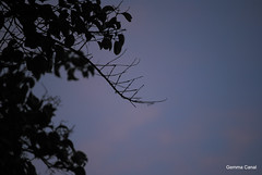 DSC_2305 (gemma_canal) Tags: tree nature leaves silhouette photography nikon darkness favme rbol silueta followme