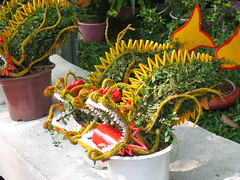Dragon Plants in Ho Chi Minh City
