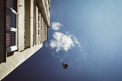High in the Sky (Hydr0X.) Tags: high sky clouds cloud cloudy flat flats block blocks blue animal animals pigeon pigeons urban window windows persiennes fly flying teal pattern patterns one oneplusone oneplus f20 smartphone mobile