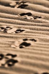 Decidí ver cada desierto como la oportunidad de encontrar un oasis, decidí ver cada noche como un misterio sin resolver, decidí ver cada día como una nueva oportunidad de ser feliz. (Nel Hanau) Tags: ergchebbi desert desierto morocco marruecos huellas footprints sand travelphoto