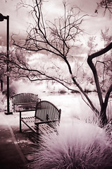 one last photo of these benches (johngpt) Tags: trees tree pond places benches bushes hbm infraredfilter hoyar72irfilter benchmonday fujifilmfinepixx100 abqbotanicgardens wclwideconversionlens
