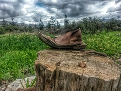 Where's my shoe? (Betsie Nel) Tags: nature shoe samsung missing stump