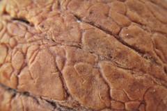 the nut :) (green_lover) Tags: macro flickrphotowalk macrotextures macromondays walnut