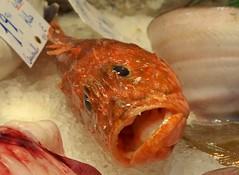 Spain (Barcelona-Fish market) Sad look !! (ustung) Tags: barcelona fish look spain sad market kodak boqueria