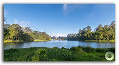 Kodaikanal Lake Panorama (Princess of Hill stations) (KS Photography!) Tags: kodaikanallake kodailake lake kodaikanal princessofhillstations panorama panoramic reflection boating boat vacations holiday tree shore calm outdoor resort vessel landscape beautiful beauty beautyinnature nature scenery winter bluesky clouds cloudscape weather water eucalyptustree lushfoliage forest majestic sunlight horizon leaf town tourist travel horizonoverland southindia hillstation indiansubcontinent pinetree greencolor palnihills grass tamilnadu india hdr