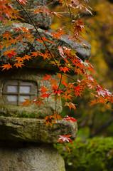 Enkou-ji in Autumn  (Patrick Vierthaler) Tags: kyoto japan kansai autumn fall herbst enkoji enkouji ahorn laub maple leaf red rot momiji garden garten japanese japanischer herbstlaub herbstlaubfrbung                11 2015