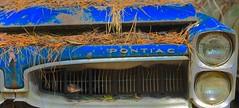Pontiac's demise. (tvdflickr) Tags: oldcarcity whitegeorgia georgia white cars auto antiques junk yard junkyard photobytomdriggers photosbytomdriggers thomasdriggersphotography nikon d610 nikond610 pontiac
