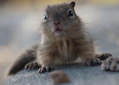 20090520-imgp5211.jpg (ellarsee) Tags: aspectratiohorizontal flickr babysquirrel facebook
