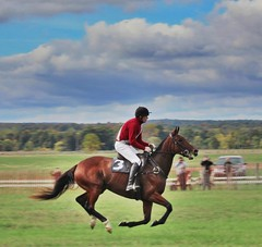 Easy Rider (dana.ny) Tags: horse equine hunt geneseevalley jumper bay silks race jockey autumn fall english red gallop