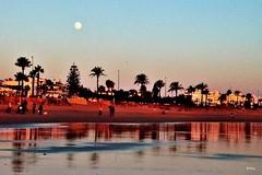 La luna sobre la araucaria (ZAP.M) Tags: horaazul atardecer playa cielo sunset labarrosa chiclana cdiz andaluca espaa flickr zapm mpazdelcerro nikon nikod5300