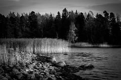 A glimpse of waterfront (Antti Tassberg) Tags: 135mm autumn bw beach blackandwhite fall karhusaari landscape lens luonto monochrome nature outdoor prime ranta shore syksy espoo