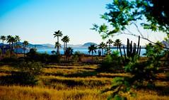 San Carlos, Sonora, Mexico (malcolmharris64) Tags: sancarlos sonora mexico bochibampo bay sea cortez gulfofcalifornia palm trees sunrise