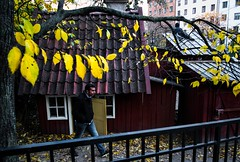 Yellow Leaves (Dovhage Photography) Tags: stockholm sweden sdermalm autumn medborgarplatsen playing outdoors yellow leaves tree small houses kid kids man walking upset grumpy red fall composition dovhage schnbichler 2015 roof boy fence tiny door
