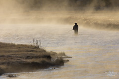 Fishing The Madison [Explore] (Michelle Pilling Photography) Tags: yellowstone national park madison river early morning fog mist fly fishing wyoming explore