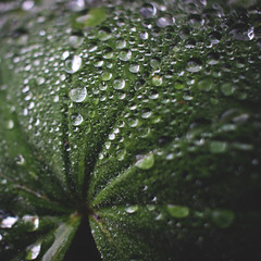 289 | 366 | V (Randomographer) Tags: project366 wet leaf clover water droplets h2o beads sparkle macro green life nature organic rain drops moisture alive 289 366 v
