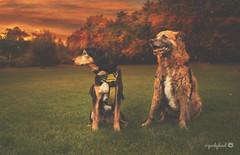 10/12 Misty - Good morning, Autumn... (yookyland) Tags: 12monthsfordogs 2016 misty 1012 dogs autumn colors sunrise