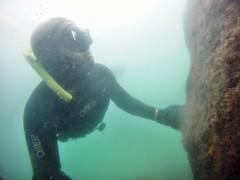 GOPR5973 (ambrogi_taubate) Tags: naturezaselvagem marinha mergulhando ubatuba sp brasil naturezamarinha fantstica apneia 10m setembro primavera 2016