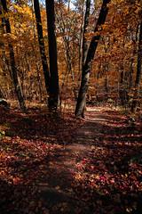 7Q7A6204 (armincreates) Tags: nature fall colors trees lake mountains hike dog puppy beauty trail panorama sunset cows farm wisconsin illinois usa walk