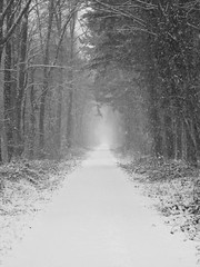 winter erases all forest colors pt1 (Aristokrat_) Tags: winter white snow black cold forest canon snowy snowfall heavy teningen