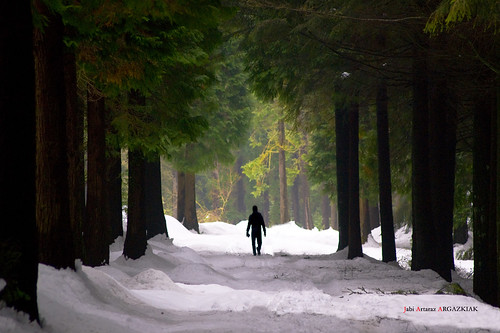 Entre cipreses y nieve