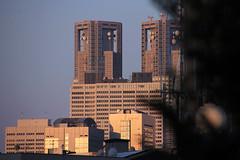 (Yorozuna / ) Tags: building japan tokyo shinjuku         tokyogovernmentoffice wakamatsukawada