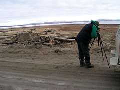 Scoping, Birdwatching, Nome-Council Highway, Nome Alaska, Photo by Ron Howard (wesbird72) Tags: road blue sky black green alaska america grey scope tripod gray driftwood american council aba dirtroad nome scopes birdwatching tundra scoping americanbirds americanbirdingassociation nomealaska alaskabirder alaskabirding alaskanbirding americanbirding americanbirder nomecouncilhighway photobyronhoward
