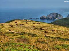 Entorno Cabo Peas (Nati C.) Tags: naturaleza mar cabo asturias paisaje nik peas hdr pacas