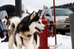 IMG_3538 (skylerroh) Tags: snow canon tahoe sierra lodge sl 6d 2014 klesis skylerroh