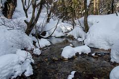 Hira, Shiga /  (Kaoru Honda) Tags: winter white mountain snow nature japan trekking landscape japanese nikon outdoor hiking mountainclimbing mountaineering       shiga  mountaintrail hira         bunagatake d7000