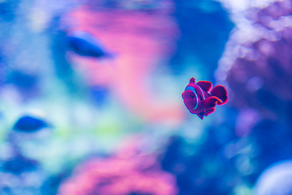 The world 39 s best photos of electric and finding flickr for Nemo light fish