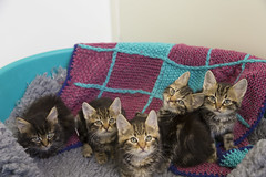 Jay and friends (chelmsfordcats) Tags: uk family england pet cats pets animal animals cat europe kittens essex chelmsford catsprotection chelmsfordcatsprotection