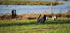 Biotop (Susanne Morhardt) Tags: saarland homburg beeden biotop nilgnse
