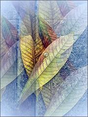 (Tlgyesi Kata) Tags: leaf foliage greenhouse botanicalgarden fvszkert botanikuskert veghz withcanonpowershota620