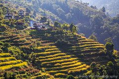 Terraced Fields, Landruk, Annapurna Circuit, Nepal (Feng Wei Photography) Tags: nepal color beautiful horizontal rural landscape asia terrace outdoor scenic peaceful np annapurnacircuit annapurna himalayas gandaki terracedfield ghandruk landruk westernregion annapurnaconservationarea landuruk