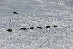 3_Pinguini (Sapienza Universit di Roma_Archivio fotografico) Tags: atmosfera ricerca cnr monitoraggio missione antartide spettrometro smfnsapienza marcodepetris unimilanobicocca uniromatorvergata cnrbologna physsapienza ricercasapienza