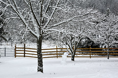 RECORD BREAKING ~ HFF (RLBrinkman) Tags: trees snow fence snowman gate recordsnow 2015snow
