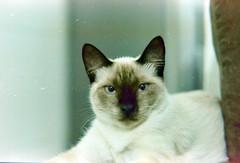 Cute (Paulo Bretas) Tags: cute film analog cat 50mm nikon chat kodak gato 400 katze 18  fm2 analgico ultramax bovo paulobretas paulobovo paulojosbretasdeoliveira