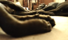 Slumber.. (Michael C. Hall) Tags: sleeping labrador floor legs sleep asleep
